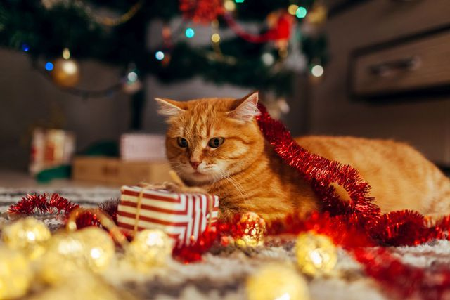 The Best Cat Christmas Present Ideas